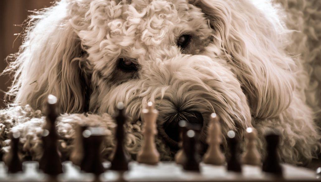 wfm chess dog
