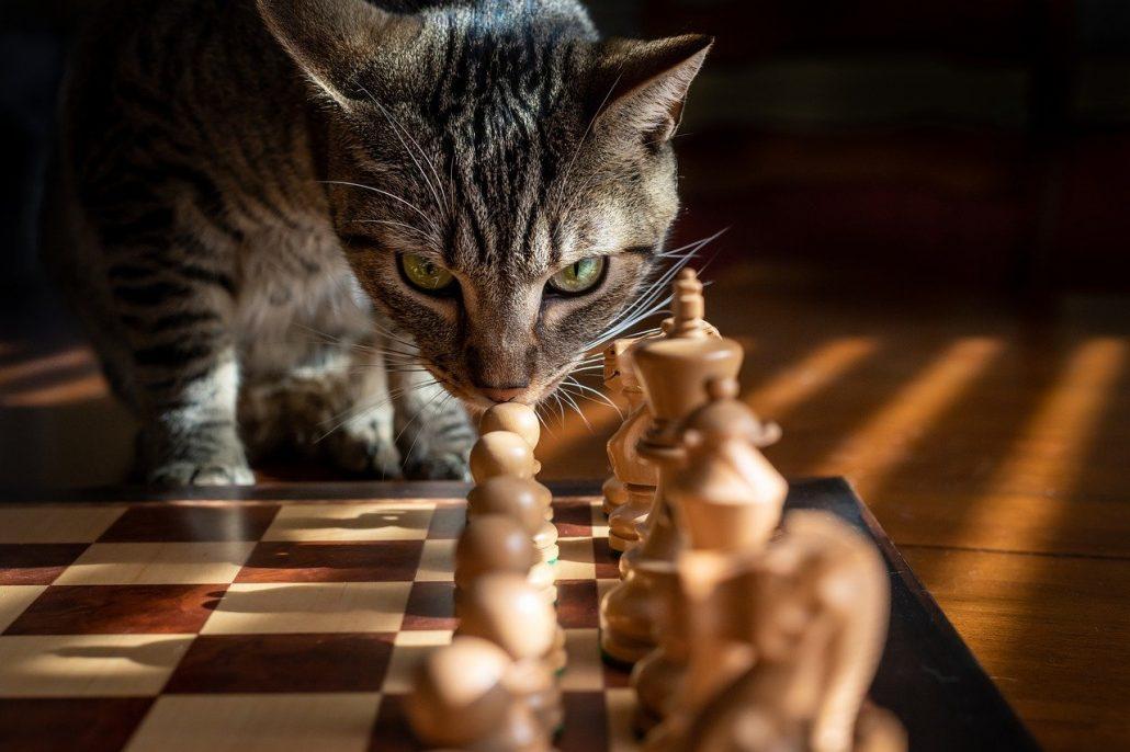 chess wallpaper cat