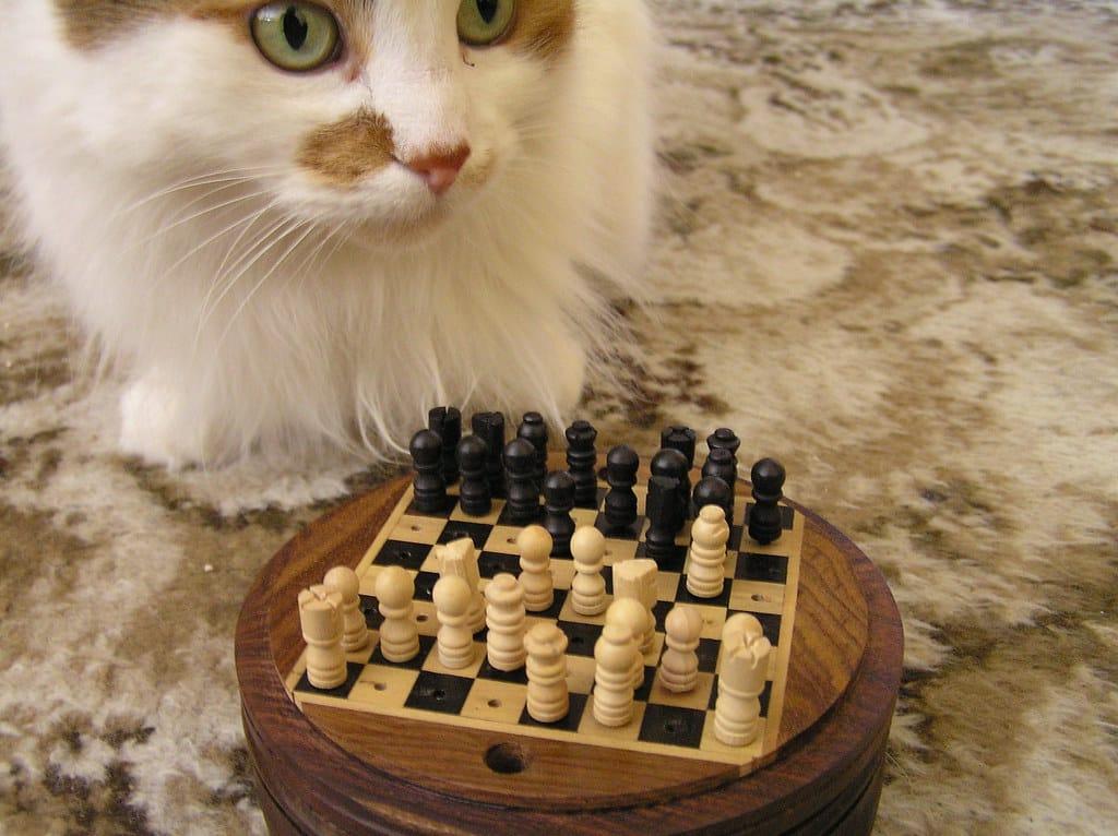 chess viewer thinking